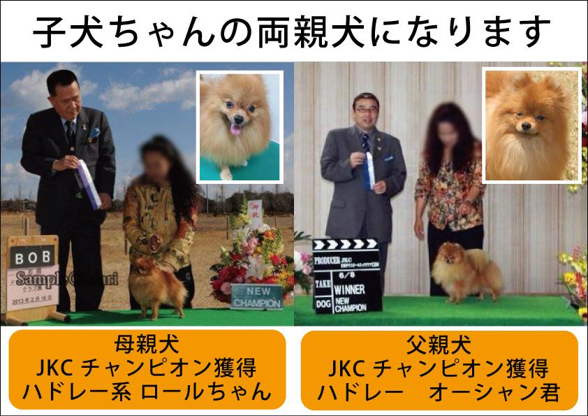 親犬画像002