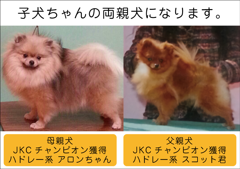 親犬画像003_01