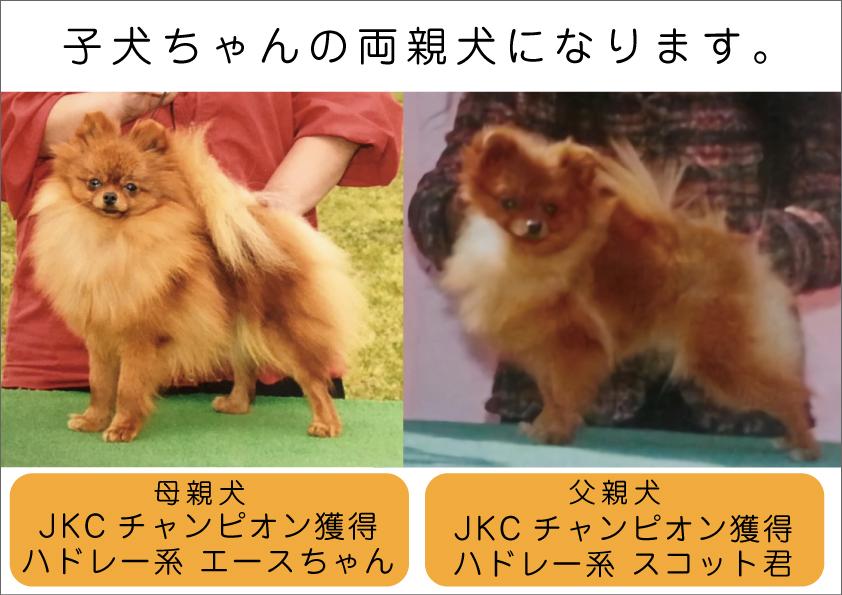 親犬画像001